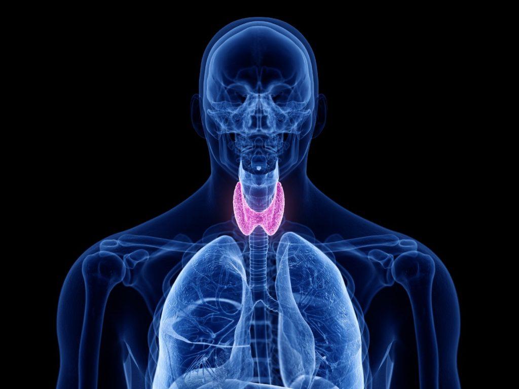 thyroid Hashimotos treatment Avon Connecticut